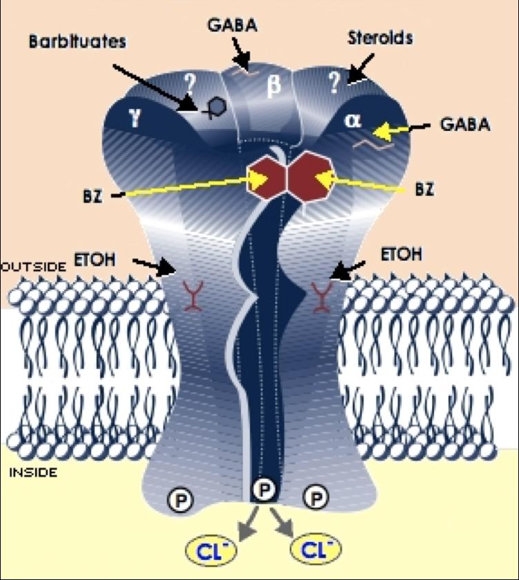 Receptor de GABA y Glicina