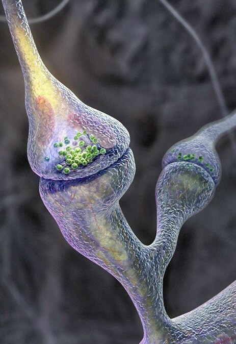 Comunicación Neurocrina